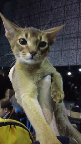 выставка котов и кошек
