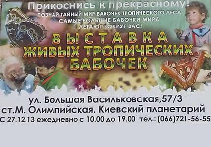 В Киевском планетарии ежедневно проводится выставка живых тропических бабочек