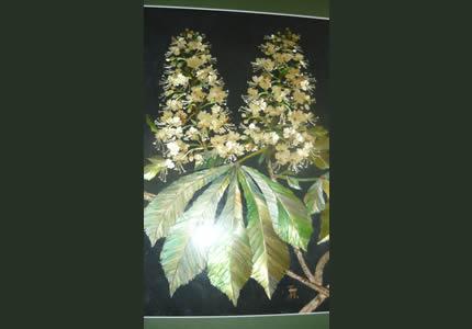 19 августа в Доме природы пройдет выставка объемных изделий из соломы «Солнечный мир соломки»