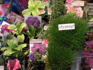 цветы на ярмарке