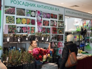 продажа семян