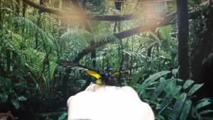 выставка тропических бабочек