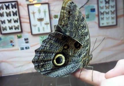 """До 1-го июня в ТРЦ Блокбастер будет проходить выставка бабочек """"Світ метеликів"""""""