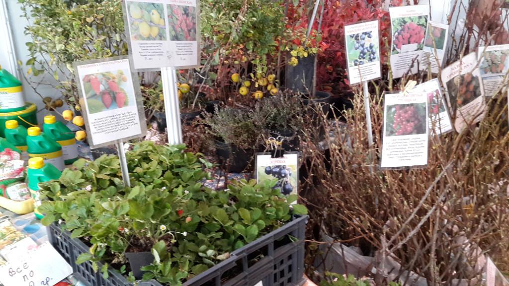 Выставка сад и огород в минске