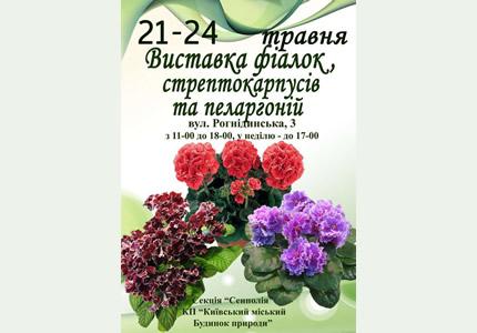 21-24 мая выставка стрептокарпусов, фиалок, пеларгоний, эписций