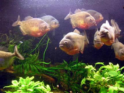 В Киевском Доме Природы открылась выставка аквариумных рыб и растений