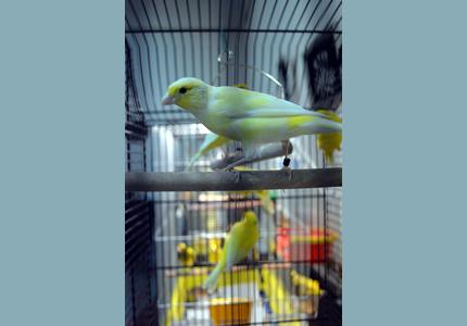 3-4 октября  в Доме Природы пройдет выставка певчих и экзотических птиц