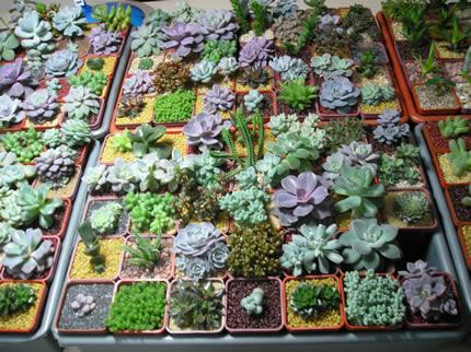 8-11 октября в Доме Природы пройдет выставка кактусов и растений-хищников