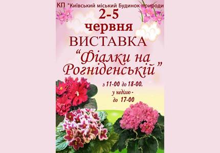 2-5 июня в Доме Природы пройдет выставка  «Фиалки на Рогнединской»