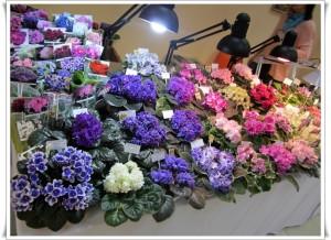 С 13 по 17 июля в ТЦ Мармелад пройдет выставка коллекционных фиалок и других комнатных растений