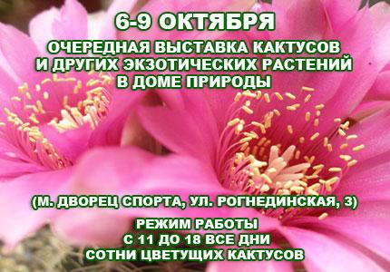 С 6 по 9 октября в Доме Природы проходит выставка кактусов и других экзотических растений