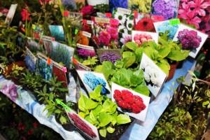 """26 - 30 октября в Украинском Доме пройдет выставка для садоводов и огородников """"Зелений ярмарок"""""""