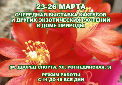 С 23 по 26 марта в Доме природы пройдет выставка кактусов