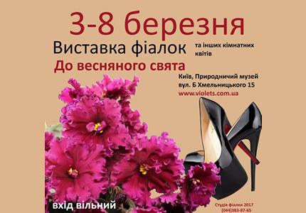 С 3 по 8 марта в Археологическом музее проходит выставка фиалок к 8 марта