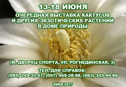 С 13 по 18 июня в Доме Природы пройдет выставка кактусов и других экзотических растений