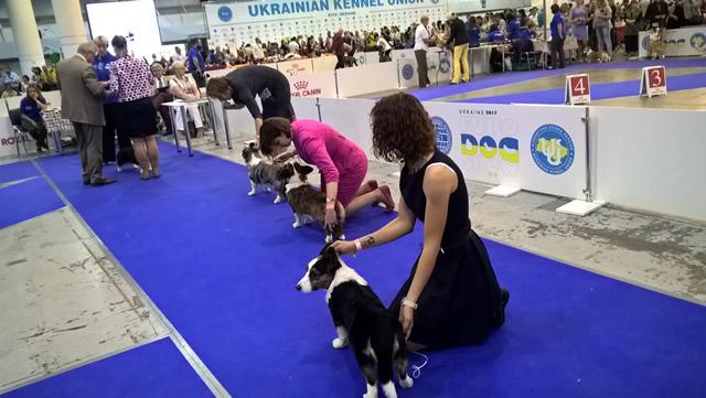 Euro Dog Show 2017. Фото 2
