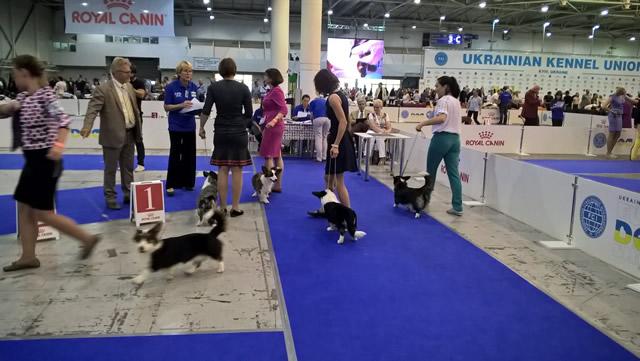 Euro Dog Show 2017. Фото 3