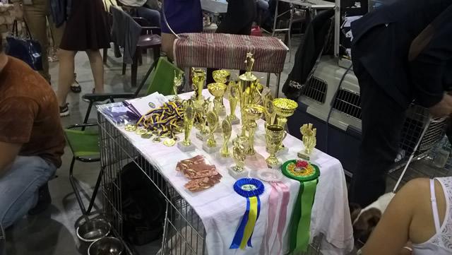 Euro Dog Show 2017. Фото 4