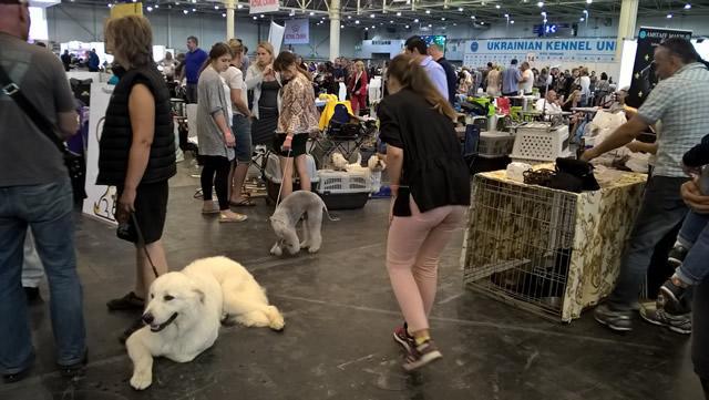 Euro Dog Show 2017. Фото 7