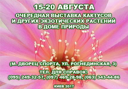 С 15 по 20 августа в Доме природы пройдет выставка кактусов и других экзотических растений