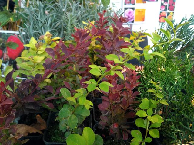 Мята и прочие домашние растения