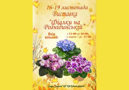 16-19 ноября в Доме природы выставка фиалок на Рогнединской