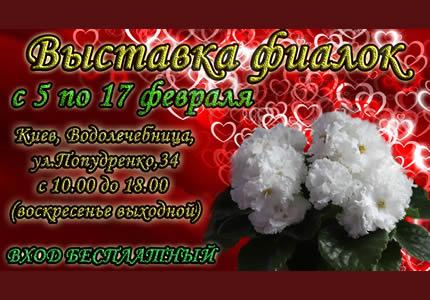 С 5 по 17 февраля на территории дарницкой водолечебницы пройдет выставка фиалок ко Дню всех влюбленных