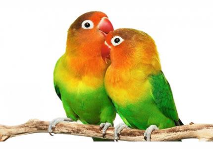 С 10 по 11 марта в Доме природы пройдет выставка птиц и террариумных животных «TropicPets»