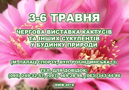 С 3 по 6 мая в Дом Природы пройдет выставка кактусов