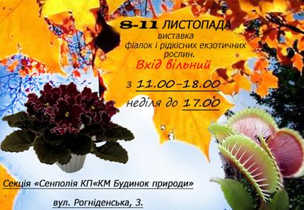 С 8 по 11 ноября в Доме природы пройдет выставка фиалок и редких экзотических растений