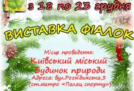 С 18 по 23 декабря в Доме природы пройдет предновогодняя выставку фиалок