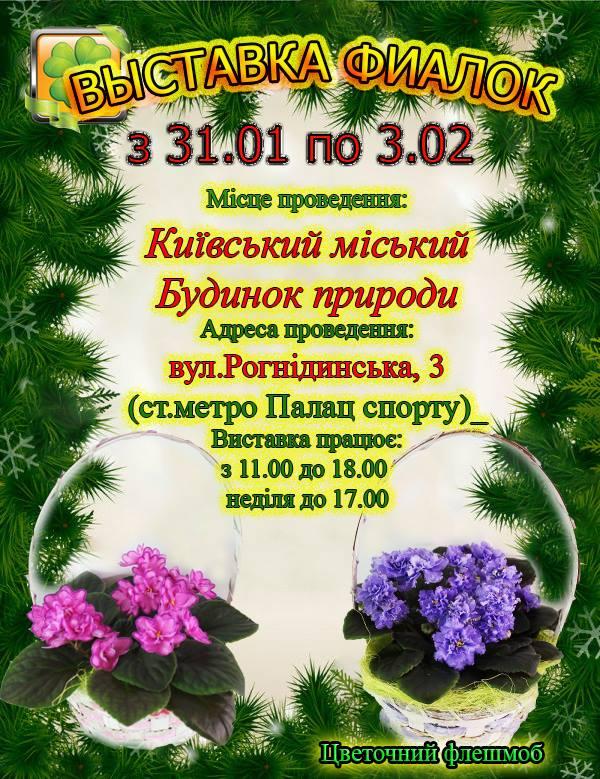 С 31 января по 3 февраля в Доме природы пройдет выставка фиалок