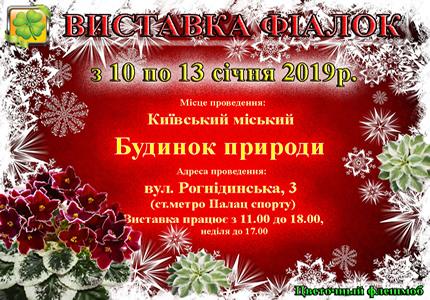С 10 по 13 января в Доме природы пройдет выставка фиалок