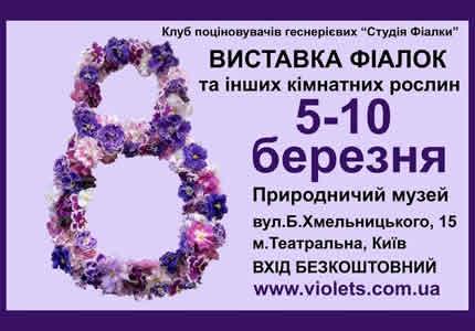 С 5 по 10 марта в Археологическом музее пройдет выставка фиалок и других комнатных растений