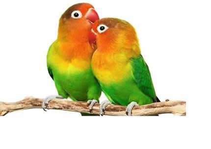 С 30 по 31 марта в Доме пройдет выставка птиц и террарумных животных «TropicPets»