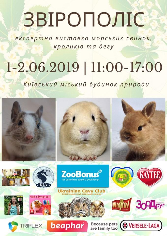 Выставка морских свинок, карликовых кроликов и дегу