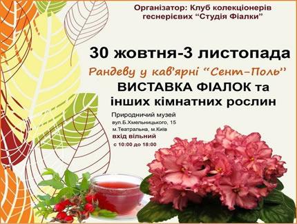 С 30 октября по 3 ноября в Археологическом музее пройдет выставка фиалок и других комнатных растений