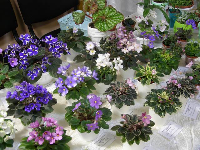 С 5 по 8 декабря в Доме природы пройдет выставка фиалок с экспозицией растений-хищников