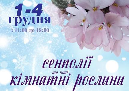 С 1 по 4 декабря в Доме природы пройдет выставка фиалок