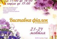 С 21 по 24 октября в Доме природы пройдет выставка фиалок